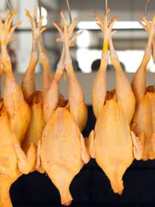 bacterias-en-pollo-procesado