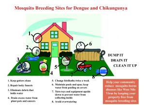 mosquito-breeding-sites-revised